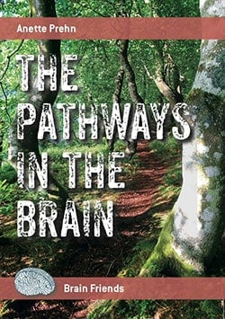 The Pathways in The Brain